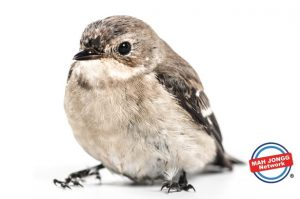 Did you know Mah Jongg means Sparrows in Chinese.